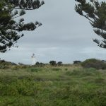 Port Fairy Lighthouse framed by the Norfolk Pines