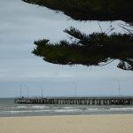 Norfolk pine by Altona Pier