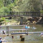 River swimming at Bright