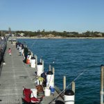 Lots of fishing off Rosebud Pier